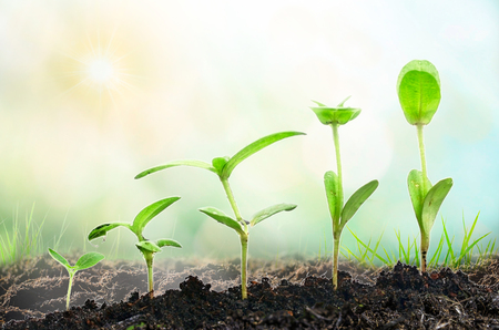 Agriculture. Growing plants. Plant seedling. Hand nurturing and watering young baby plants growing in germination sequence on fertile soil with natural green background. Stock Photo