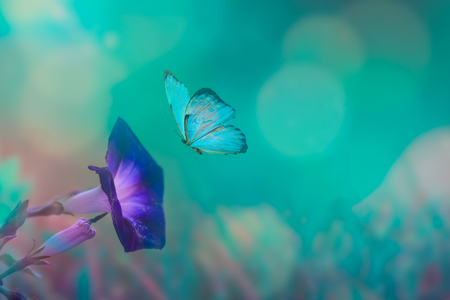 Butterfly in the grass on a meadow at night in the shining moonlight on nature in blue and purple tones, macro. Fabulous magical artistic image of a dream Stock fotó