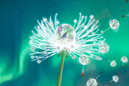 Beautiful water drops on a dandelion seed macro in nature. Beautiful blurred green and blue background. Dew drops on dandelion with free space. Stock Photo