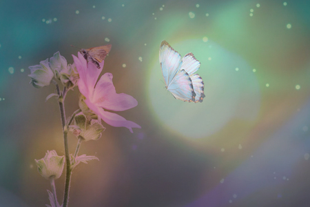 Butterfly in the grass on a meadow at night in the shining moonlight on nature in blue and purple tones, macro. Fabulous magical artistic image of a dream, copy space. Banque d'images