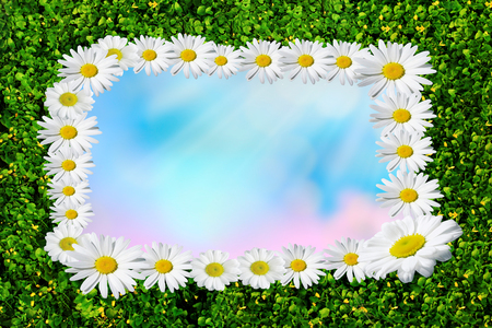 Summer blossoming daisies, chamomiles on meadow, Daisy boarder with space for text Фото со стока