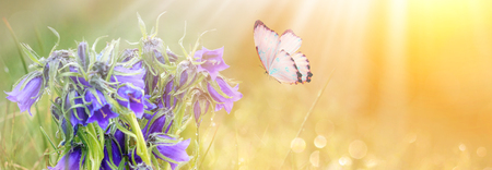 wild meadow blue flowers and butterfly on morning sunlight background. Фото со стока