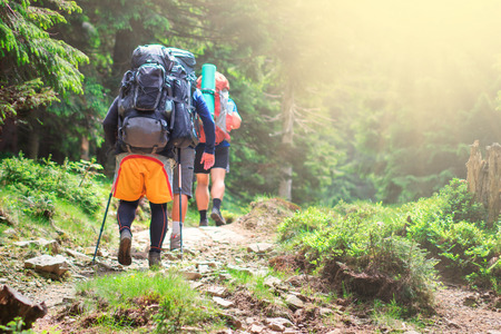 back view of male hiker with backpack walking in forest Фото со стока