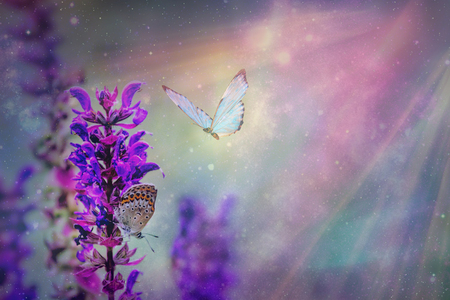 Floral spring natural landscape with wild pink lilac flowers on meadow and fluttering butterflies on blue sky background. Dreamy gentle air artistic image. space for text Фото со стока