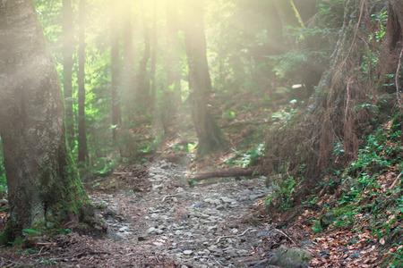Dark magic forest with sunshine Фото со стока