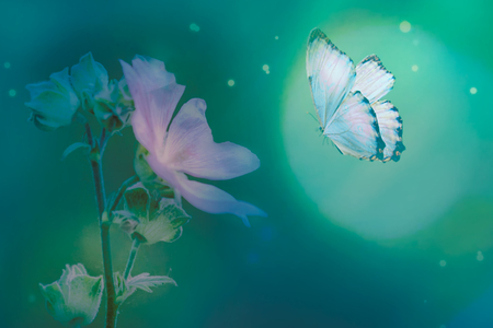 Butterfly in the grass on a meadow at night in the shining moonlight on nature in blue and purple tones, macro. Fabulous magical artistic image of a dream, copy space. Фото со стока