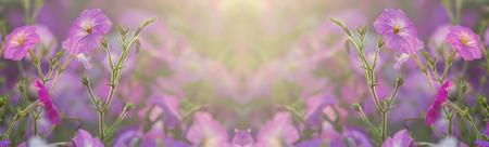 Flowerbed with multicoloured petunias Image full of colourful petunia