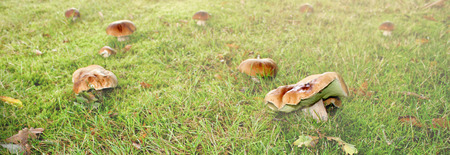 Mashroom in grass field Stock Photo