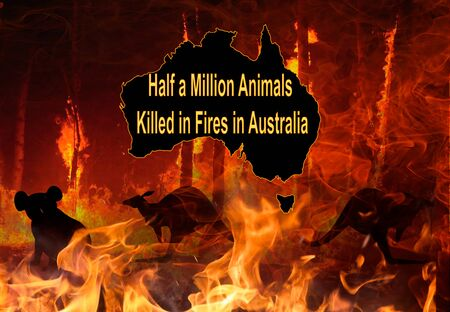 Australia wildfire killed half a billion animals. Save animal - save tree-save forest save world. animals burned by wildfire. climate change effect.