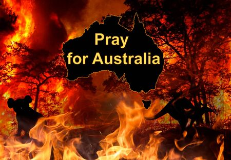 Pray for Australia. Background Wildfire closeup at night and Animals Killed in Fires in Australia 写真素材