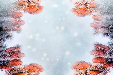 Winter frame of snow-covered fir branches and place for text 写真素材
