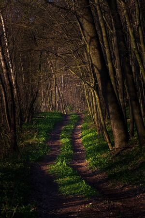 Road in the mistic forest. Green sping Banque d'images - 144168749