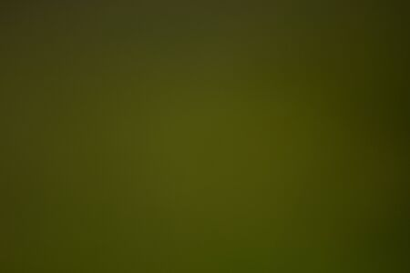 Sunny abstract green nature background, selective focus. Blur Stock Photo - 147935395