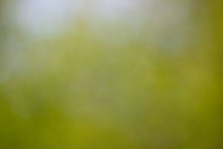Sunny abstract green nature background, selective focus. Blur