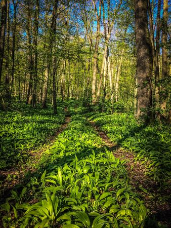 Spring green road forest. Nature plant Stock Photo