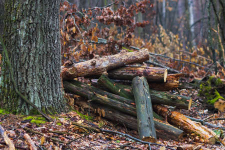 firewood in the forest tree