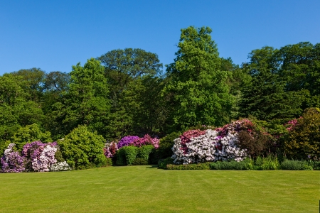 Rhododendron Azalea Bushes and Trees in Beautiful Summer Garden in the Sunshine Stock Photo
