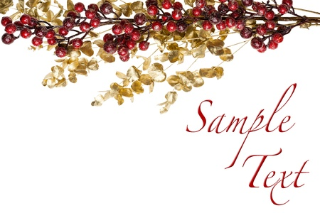 Sparkly Red Berries on Golden Leaves Isolated Border with Copy Space photo