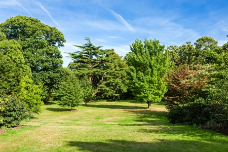 beautiful woodland: Lush Green Beautiful Woodland Park Garden in the Sunshine Stock Photo