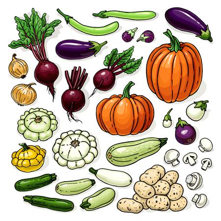 イラストの野菜は、白で隔離。カボチャ、根、キャベツ、jar、ビート、ブロッコリー、ジャガイモと有機食品のスケッチとベクトル カラー スケッチ