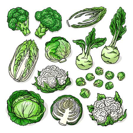 健康新鮮なアブラナ科の野菜でキャベツ、ブロッコリー、カリフラワー、芽キャベツ、コールラビ、白い背景で隔離のベクター スケッチ