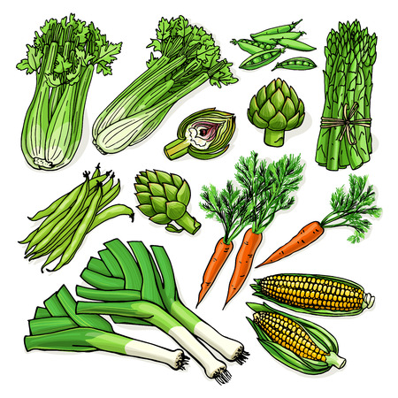 Vector illustration with assorted raw organic vegetables - artichoke, asparagus, carrot, celery, corn, green bean, leek, peas. Sketchy food isolated on white background Ilustração