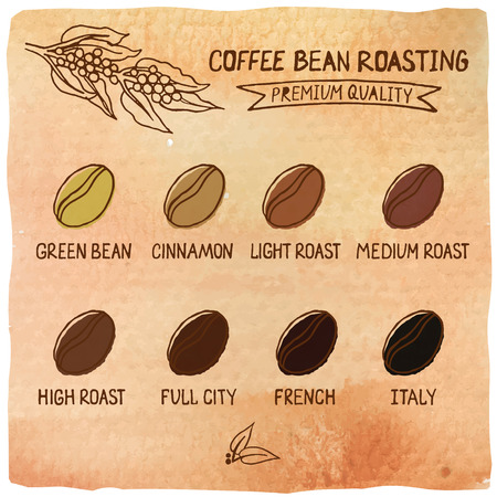Vector illustration of coffee beans showing various stage of roasting from the green bean through to a dark roast on watercolor background Ilustração