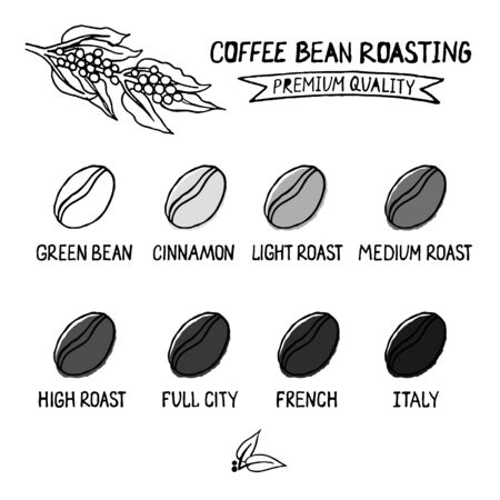 Vector illustration of coffee beans showing various stage of roasting from the green bean through to a dark roast. Ilustração