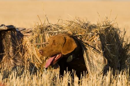 Hond te wachten in de blinde Stockfoto