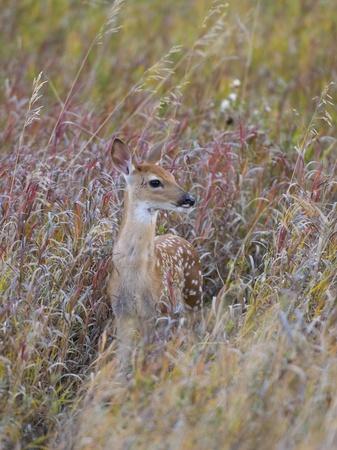 Deer Fawn Stock Photo - 15321475