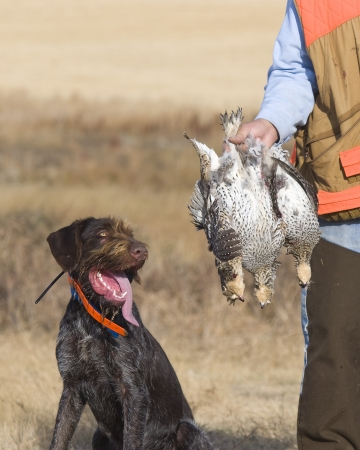 Dog with Sharptailed Grouse photo