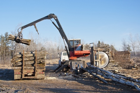 forest products: Loading a truck with freshly cut aspen logs