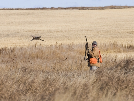 Pheasant Hunting Stock Photo - 17785292