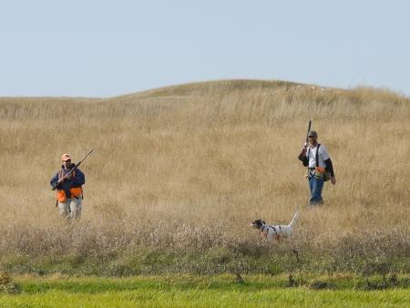 hunting dog: Pheasant Hunting