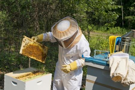 the keeper: Bee Keeper