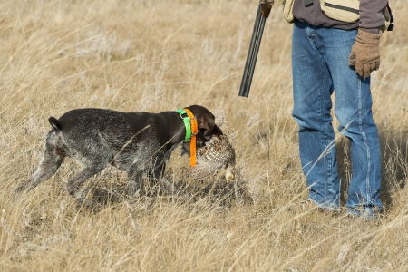 wirehair: Hunter and His Dog