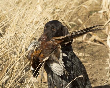 perro de caza: Los cazadores de perro