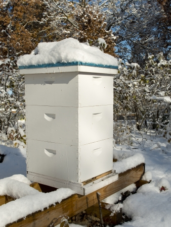 pollinator: Winter Bee Hives