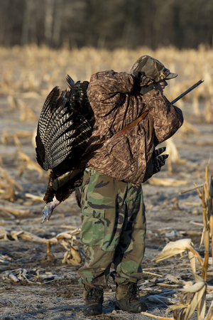 gobble: Wild Turkey Hunting