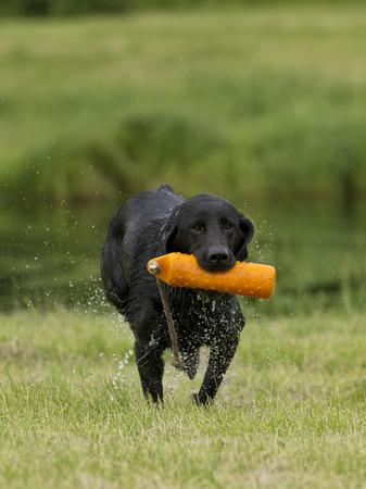 Dog Training Reklamní fotografie - 30924938