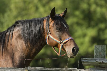 Horse looking over a fence Reklamní fotografie