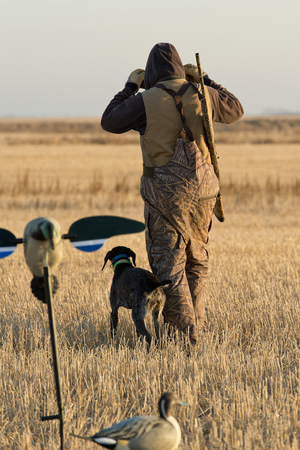 decoy: Duck Hunter Stock Photo
