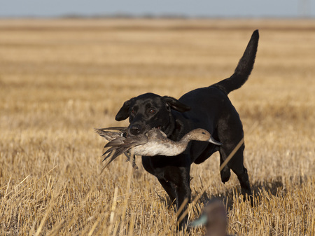 duck hunting: Duck Hunting