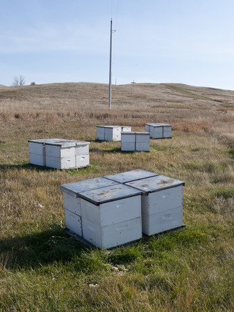 hives: Bee Hives