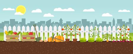 Urban gardening planting growing vegetables flat design vector graphic