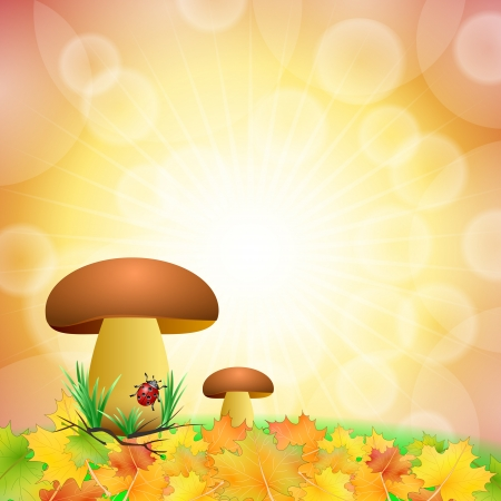 mushroom background Stock Photo