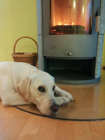 Labrador dog in front of fireplace