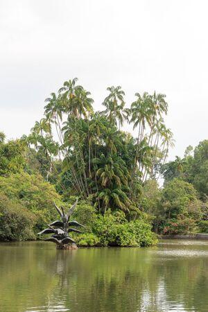 botanic: Swan lake in Singapore Botanic Gardens Stock Photo