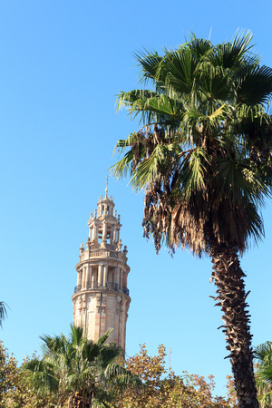 barcelona cathedral: Palm tree and church Barcelona Cathedral bell tower