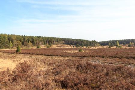 Heathland panorama and trees in Luneburg Heath near Undeloh and Wilsede, Germany Stock Photo
